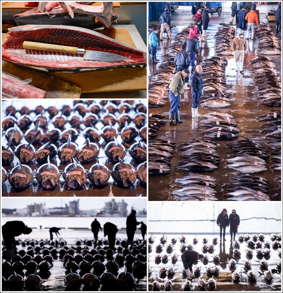 japan-fish-market
