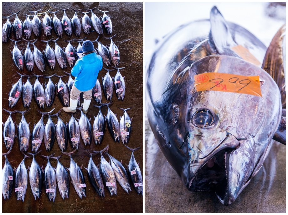 japan-fish-tuna