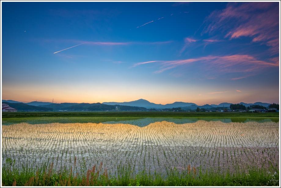 japan-ricefield
